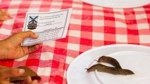 Mass-Consternation-Slug-Race-Blaine-Washington-Events-4