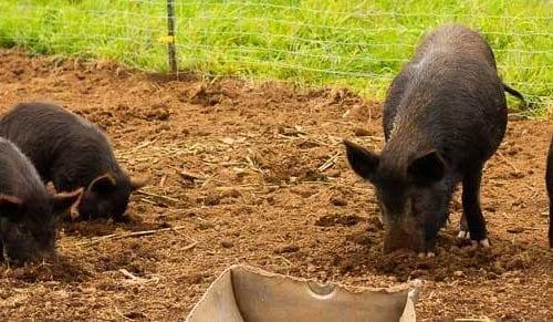 MC-Whatcom-County-Farm-Tour-Visit-The-Farms-Mass-Consternation-Featured-1